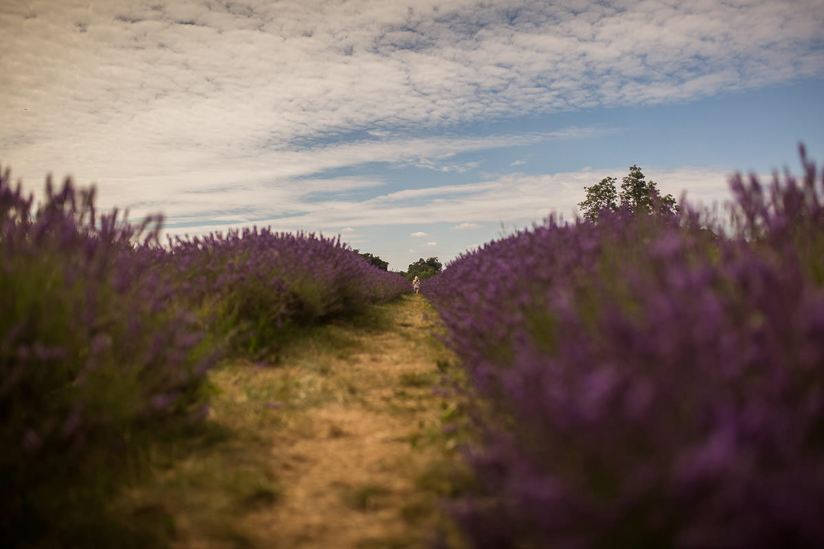 mayfield lavender field surrey